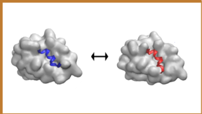Binding peptides to proteins